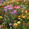видеть полевые цветы во сне