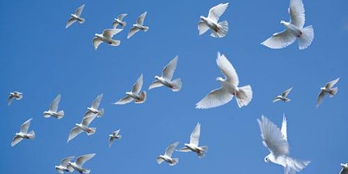 к чему снятся птицы в небе