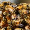 видеть во сне рой пчел