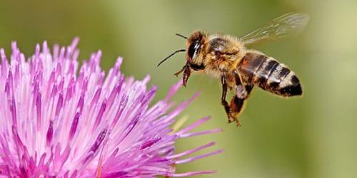 к чему снится рой пчел