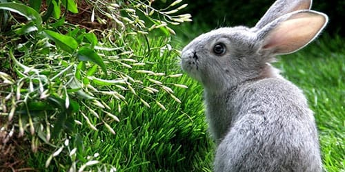 приснился серый кролик