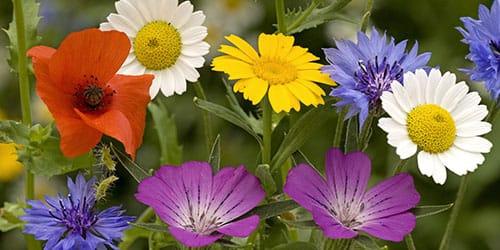 собирать цветы во сне
