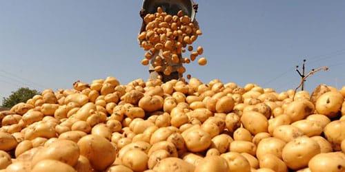 собирать картошку во сне