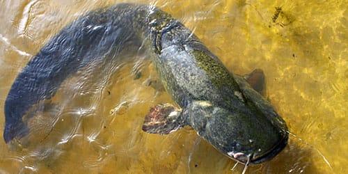 большая рыба в воде