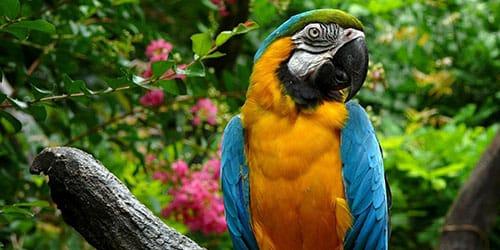 видеть во сне большого попугая