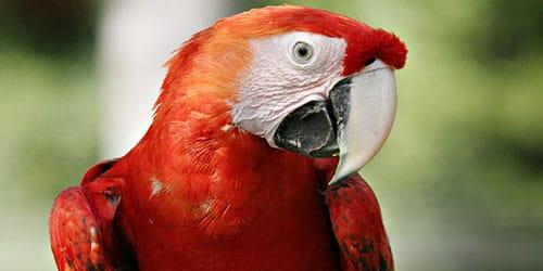 к чему снится большой попугай