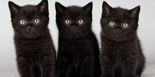видеть во сне черных котят