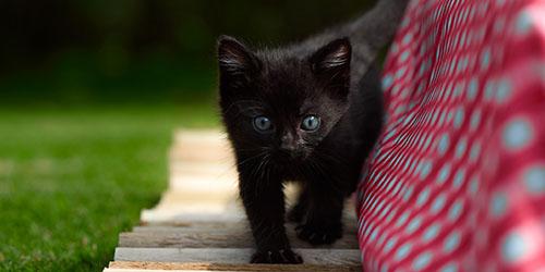 Маленький пушистый черный котенок