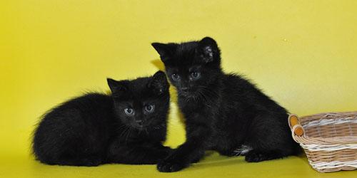 Приснились два черных котенка