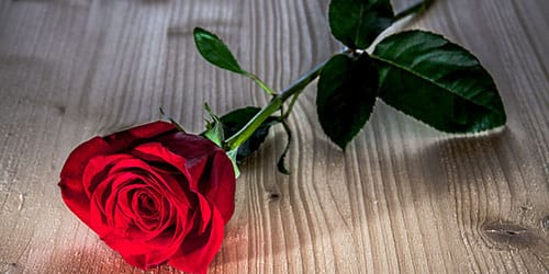один цветочек