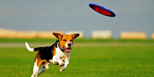 к чему снится играть с собакой