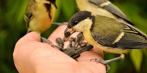 кормить птиц во сне