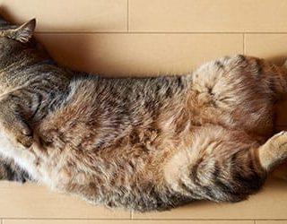 Умерший кот или кошка