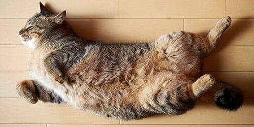 кот умер во сне