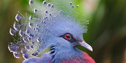 птица с красными глазами