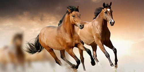 видеть как лошади бегут во сне