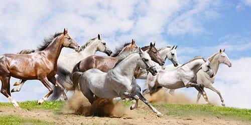 к чему снится что лошади бегут