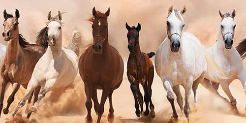 кони скачут