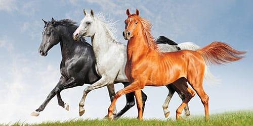 три коня