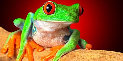 видеть во сне лягушку в доме