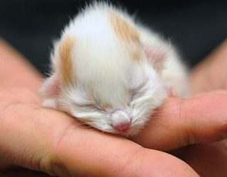 Мертвый котенок во сне