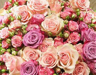 Много цветов