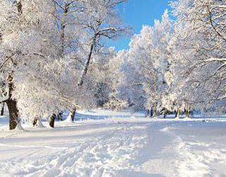 Много снега