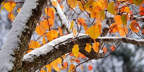 снег выпал осенью