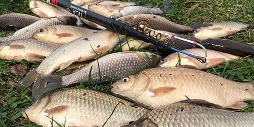наловить много рыбы