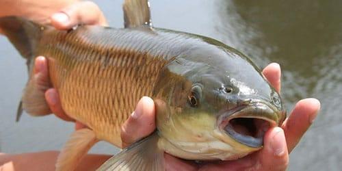 выудить рыбу