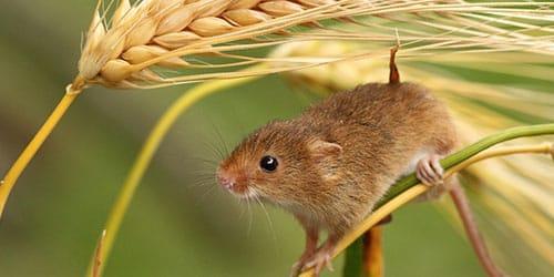 поймать мышь во сне
