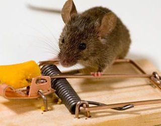 Поймать мышь