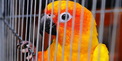 видеть во сне попугая в клетке