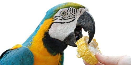 кормить птицу