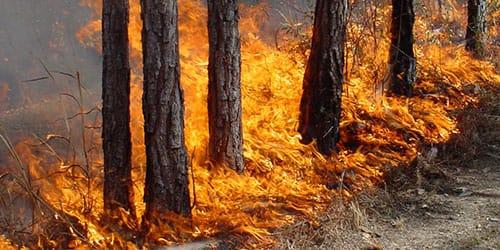 видеть во сне пожар в лесу