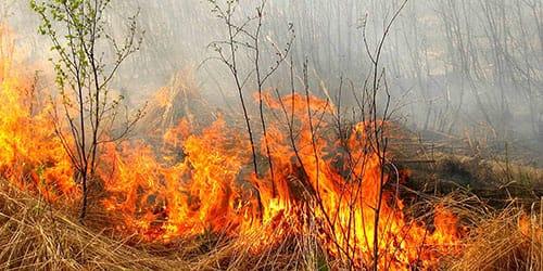к чему снится пожар в лесу