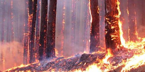 деревья горят
