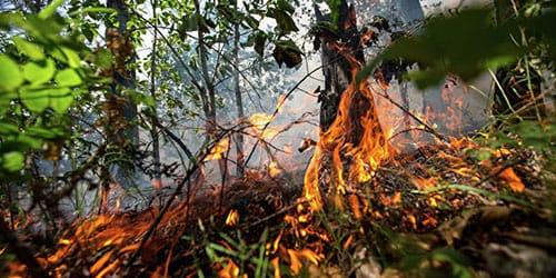 лес загорелся
