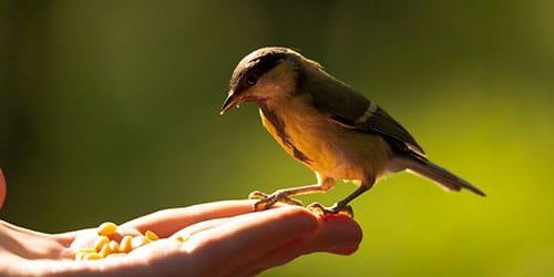 видеть птицу в руках во сне