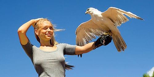 к чему снится птица в руках