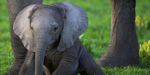 видеть слоника во сне
