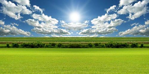 видеть во сне зеленое поле