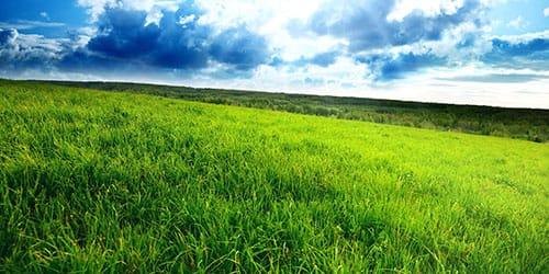 к чему снится зеленое поле