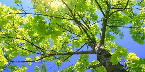 видеть во сне зеленые деревья