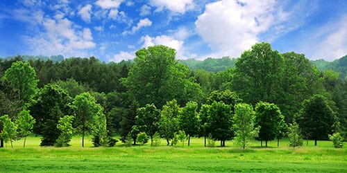 к чему снятся зеленые деревья