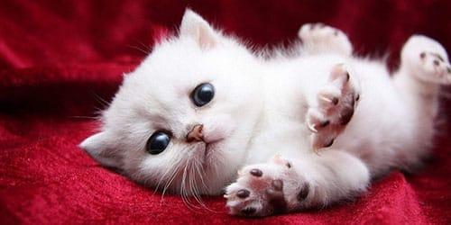 белые котята во сне