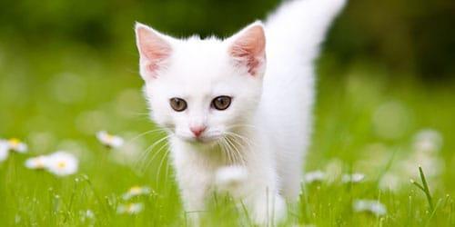 белоснежное существо