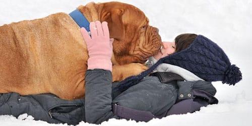 играть с собакой