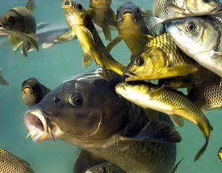 К чему снится большая рыба в воде?