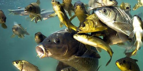 видеть во сне большую рыбу в воде